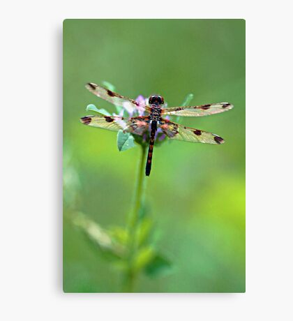 Dragonfly - Pink Clover Canvas Print
