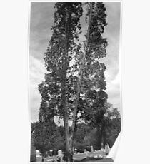 Leaning Trees Poster