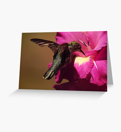 HUMMINGBIRD SIPPER Greeting Card