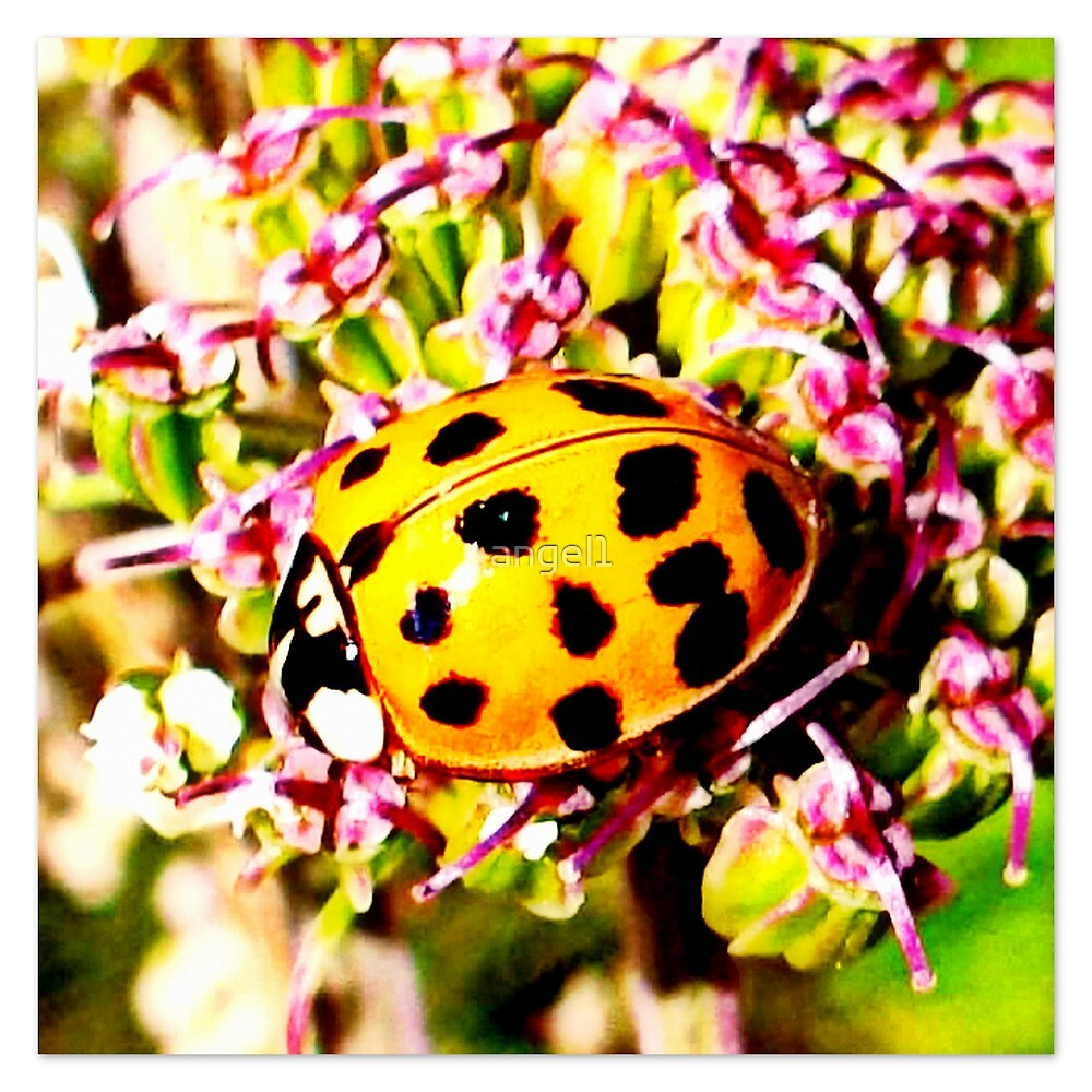 LADYBIRD by ©The Creative  Minds