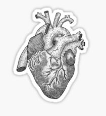 Anatomical Heart Ink Illustration Sticker
