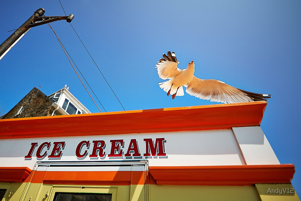 The Ice Cream Seagull by Andy Freer