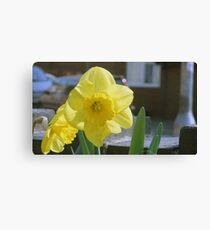 Yellow trumpet Canvas Print