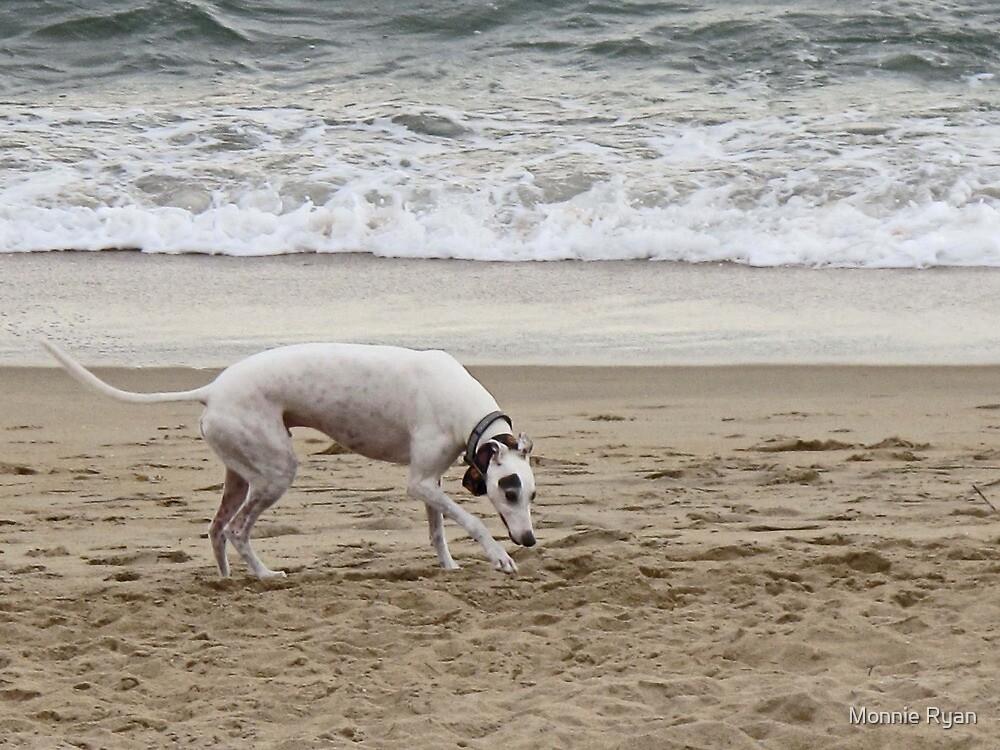 Beachy Keen by Monnie Ryan