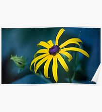 Bedazzled by the Black Eyed Susan Poster