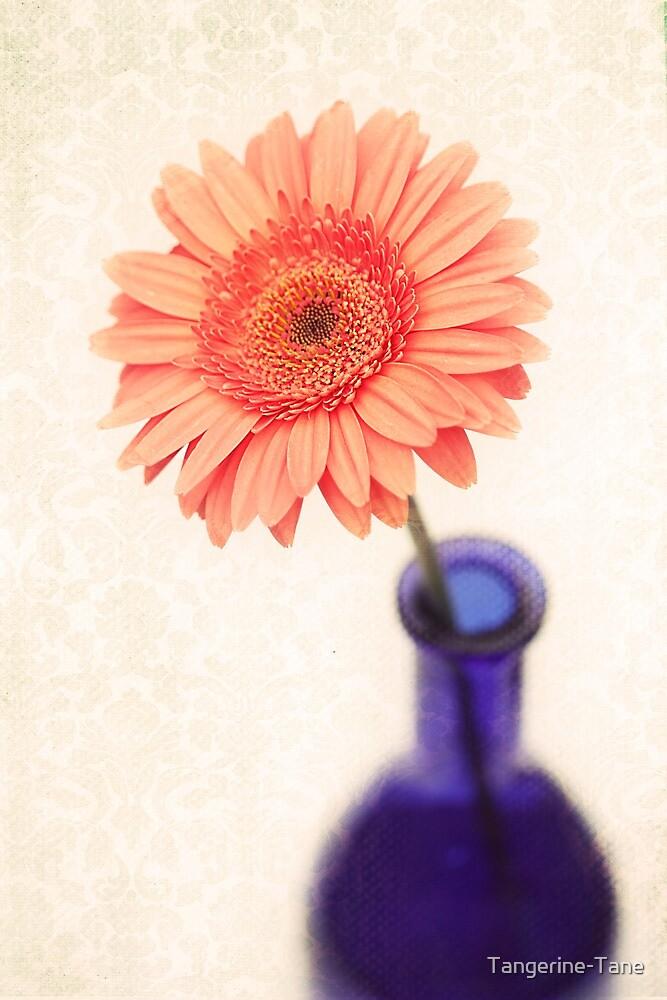 Solitary Stunner by Tangerine-Tane