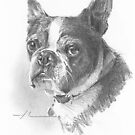 Little little dog drawing by Mike Theuer