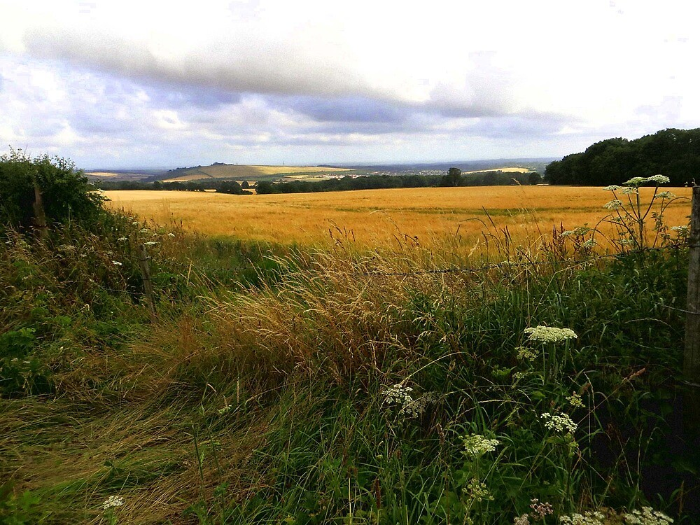 Late Summer View by Caroline Anderson