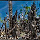 Dead Island by Edvin  Milkunic