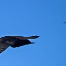 The Chase by TheGreatContini