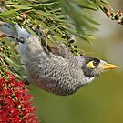 Stay Away From My Bottlebrush by TheGreatContini