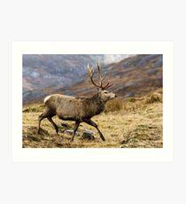 Red Deer Stag Running Art Print