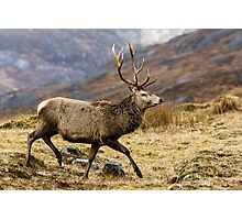 Red Deer Stag Running Photographic Print