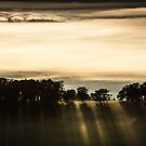 Rolling Fog - Sunrise by Jenni Tanner