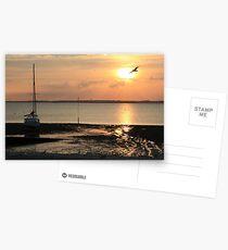 Flying Bird Postcards