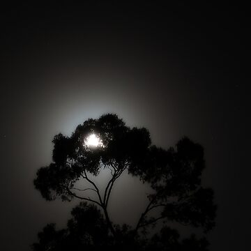 Arboreal Moonrise by DuncanW