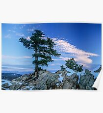 Above Boulder Colorado Spirit Tree Poster