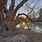 Bush Sunset by William Bullimore