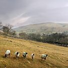 Misty Day in the Yorkshire Dales by Christine Smith