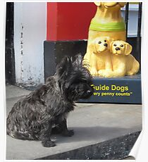 Guard Scottie Poster