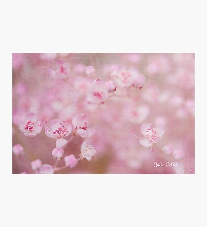 Soft Kisses on a Summer's Day Photographic Print