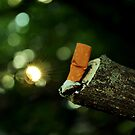 Ash and Trash by Andrea Bodnarik