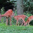 Mommy Deerest and the Twins by Ron Russell