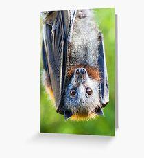 Grey-headed Flying-fox Greeting Card