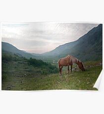 Welsh Mountain Pony Poster