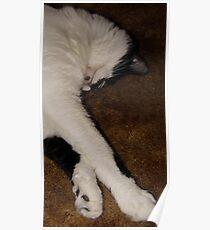 Quincy Sleeping Poster