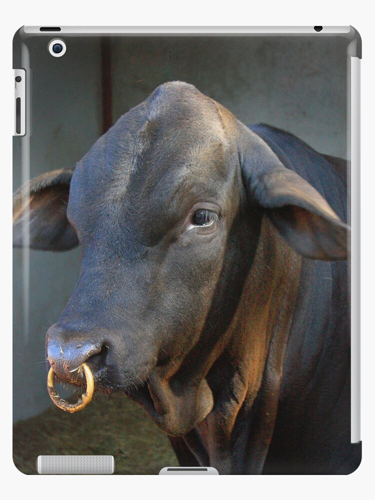 Beef Master Bull With Nose Ring Ipad Case Skin By Cassandra2lana Redbubble