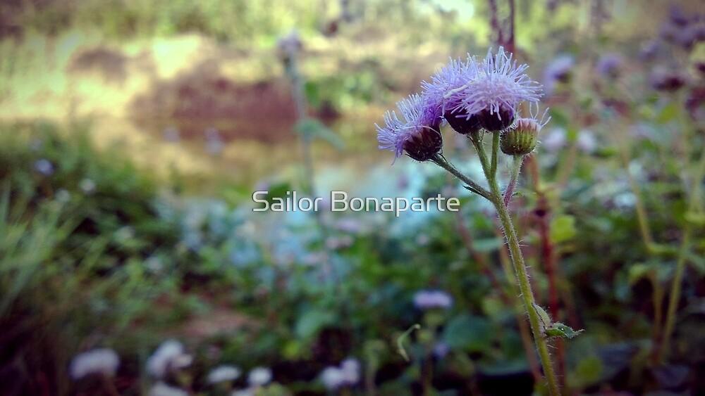 Purple Buds by Aleks Bonaparte