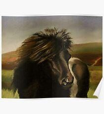 Shetland Pony in Pastel  Poster