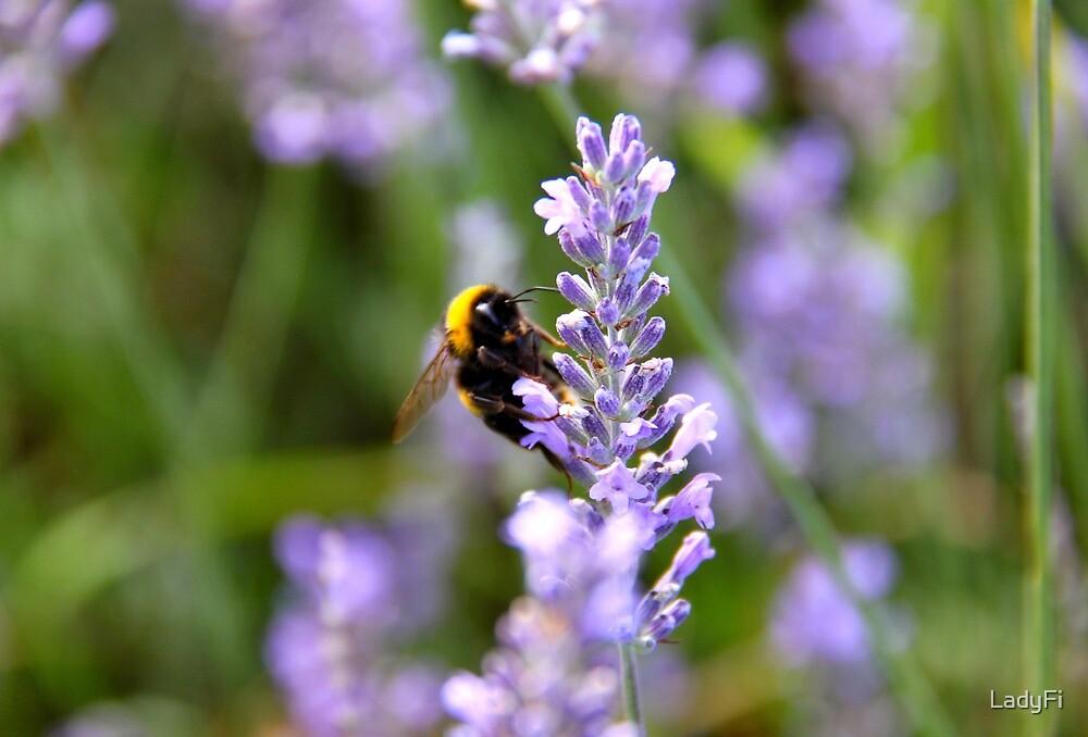 Lavender dreams by LadyFi