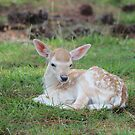 Deer Fawn by Mdillon