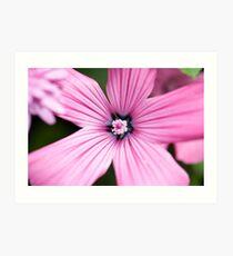 Marco Pink Flower Art Print