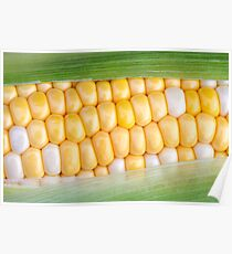 Sweet Corn on the Cob Poster