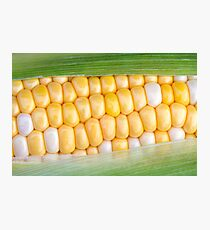 Sweet Corn on the Cob Photographic Print
