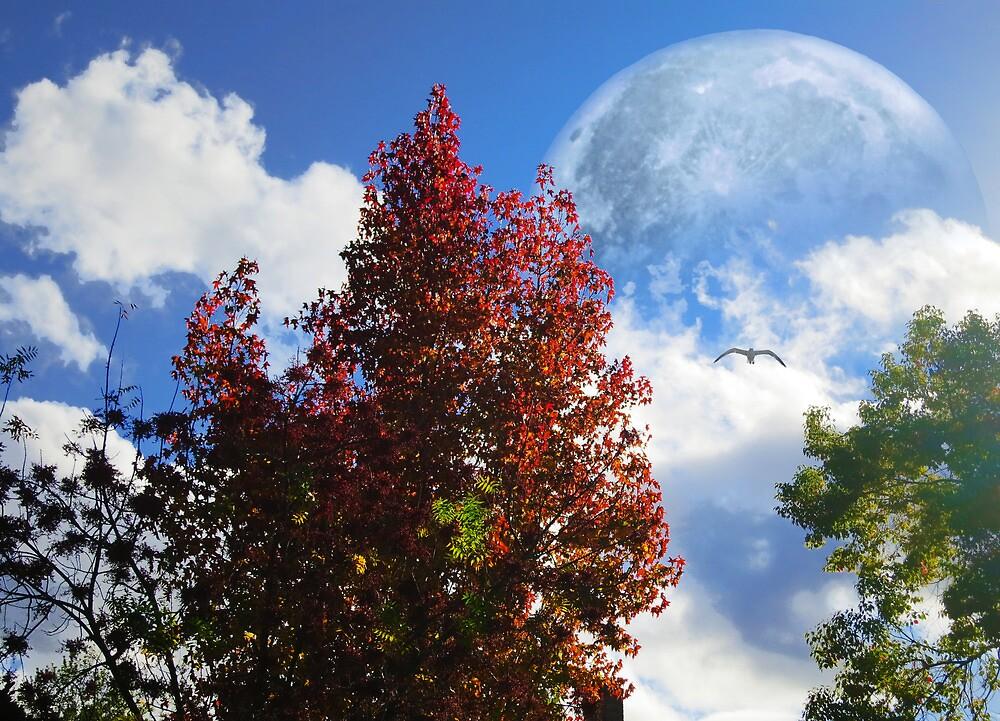 Blue Moon   by David Denny