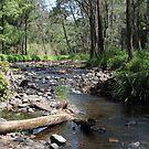 Tallebudgera Creek, Tallebudgera Valley, SE Qld., Australia by aussiebushstick