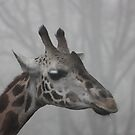 Giraffe in the Fog by Tanya Shockman