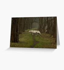Sheep on the dike Greeting Card