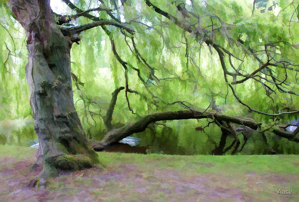 Trees by Aase