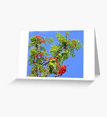 Red, Green And Blue Greeting Card