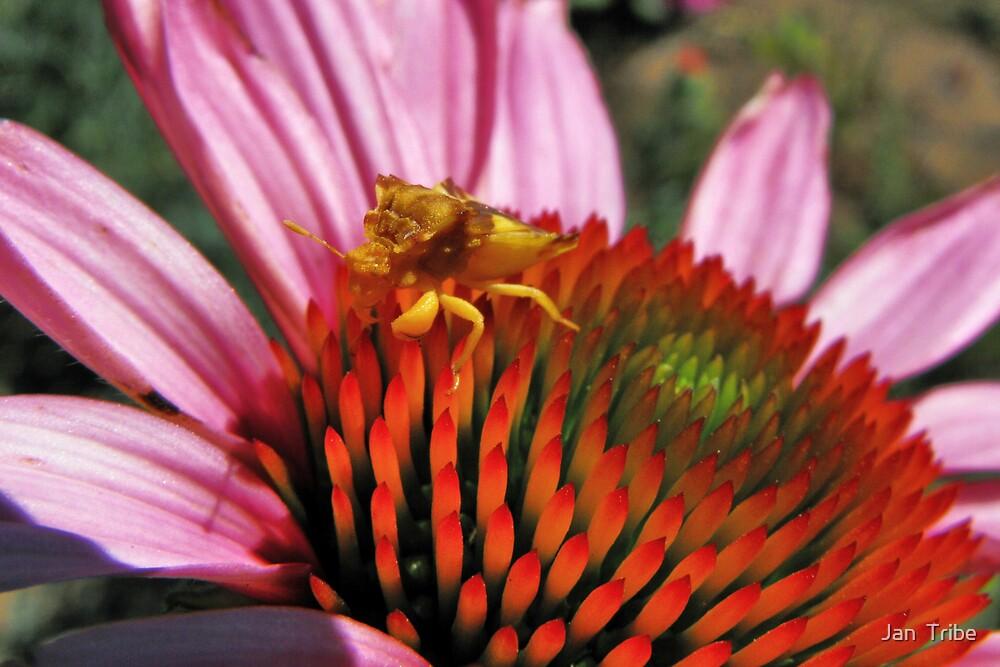 Ambush Bug by Jan  Tribe