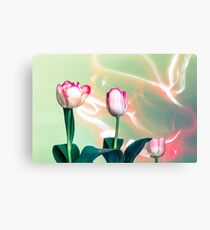 Pink Tulips Painted with Light Canvas Print