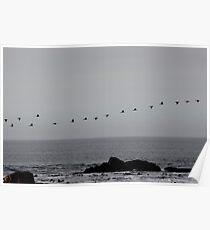Cormorants heading home Poster