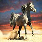 Sunset dancer by Alan Mattison