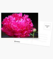 Pink Peony III Postcards