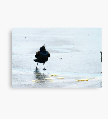 Bird Singing About Chips Canvas Print